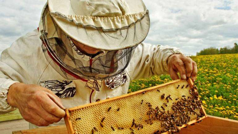 The Sweet Truth Behind Honey