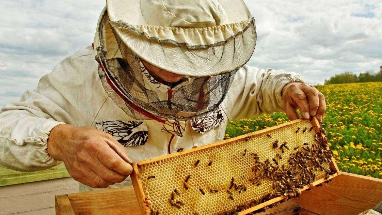 Bee Wax
